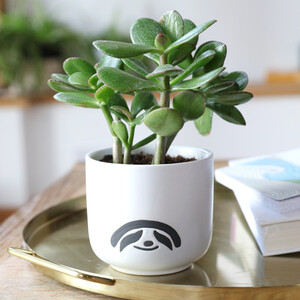 ceramic-sloth-planter-0v8a1352-300×300